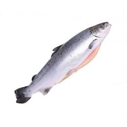 Семга 4-5 кг. атлантическая (лосось) потрошенная с головой